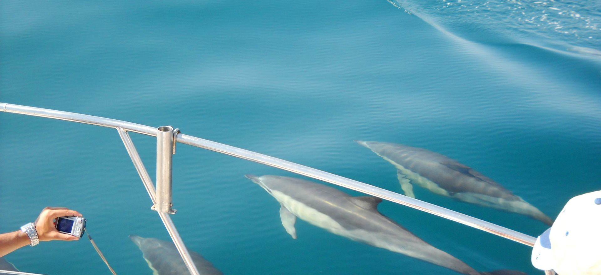 Dolphins watching vilamoura